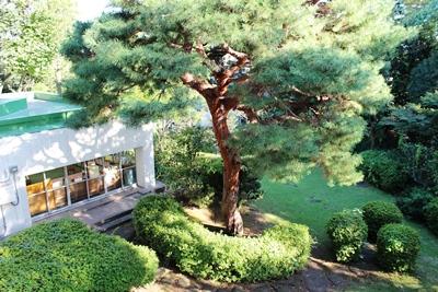 2階の一般閲覧室から見える中庭の景色